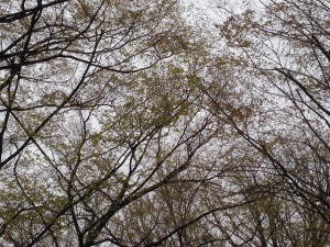 写真 2014-04-18 10 03 39